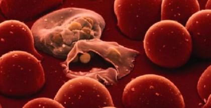 كيف تنزلق الطفيليات القاتلة إلى الخلايا البشرية؟