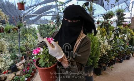 مواطنة تعمل مع زوجها في مشتل لزراعة الأزهار