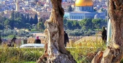 القدس: هل وصلت الرسالة؟