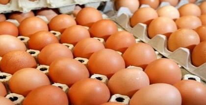 لا ترميها بعد اليوم.. أفضل طريقة لاستغلال كرتونة البيض الفارغة