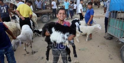 طالع الصور.. استعدادات المواطنين لعيد الأضحى بغزة