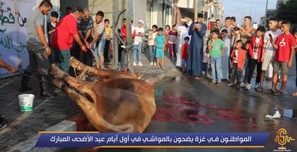 شاهد.. المواطنون في غزة يضحون بالمواشي في أول أيام عيد الأضحى المبارك